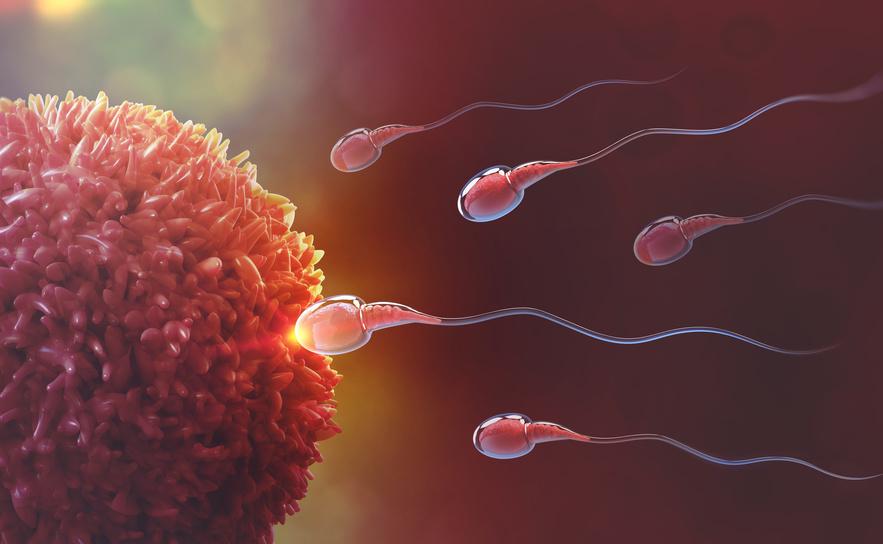 Spermaqualität - wie verbessern?